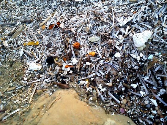 Σε οργανωμένη παραλία: φίκια μπερδεμένα με σκουπίδια που σε λίγο καιρό μάλλον θα βγει από μέσα το... Άλιεν.