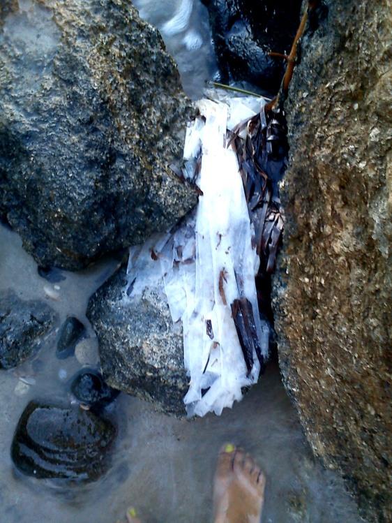 Πλαστικές σακούλες σφηνωμένες σε βράχια, σε οργανωμένη παραλία....