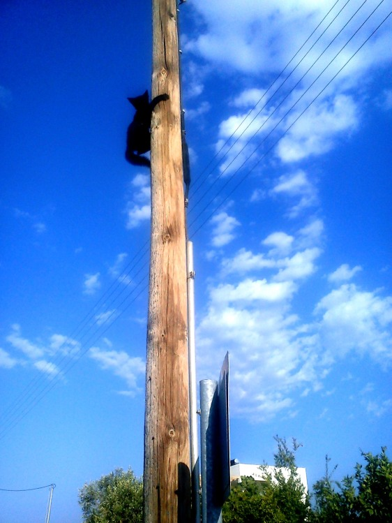 Γάτα ανεβασμένη σε στήλο μετά από μάχη με σκύλο στο σωρό με τα σκουπίδια...